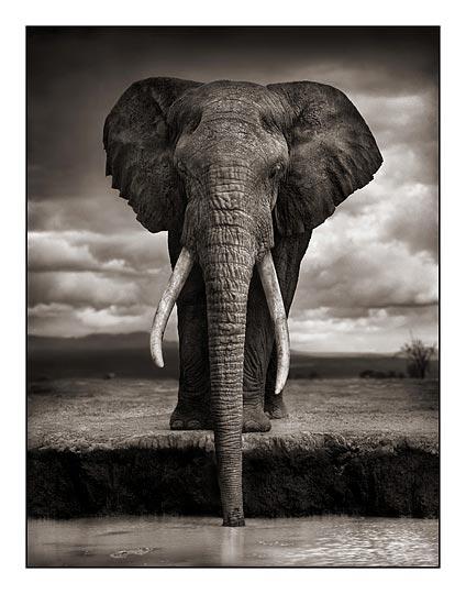 01_Elephant-Drinking